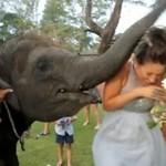 Słoń chciał zjeść... DRUHNĘ!