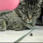 Mucha zabawia kota