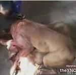 Nielegalna walka psów! Drastyczne!