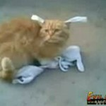Rosjanie męczą kota!