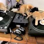 Gdy DJ kupi sobie zwierzaka...
