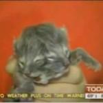 Kot z dwiema głowami