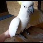 Papuga z KRYZYSEM OSOBOWOŚCI!