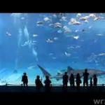 Drugie największe akwarium świata - CUD!