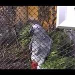 Gadająca papuga z polskiego ZOO - co ona powiedziała!?