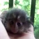 Kolekcjoner SŁODKOŚCI - małpka