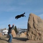 Psi parkourowiec o imieniu Lexi