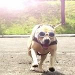 Najbardziej ekstremalny pies świata!