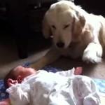 Psy - najlepsze niańki!