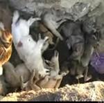 Masowa eksterminacja psów przed Euro 2012! DRASTYCZNE!