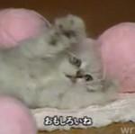 Kociaki z Azji