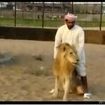 Na lwie na oklep
