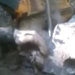 Strażacy ratują kota!
