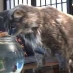 Przestraszne koty - KOMPILACJA