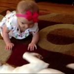 Pies - najlepszy instruktor chodzenia
