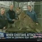 Zwierzę zaatakowało dziennikarkę!