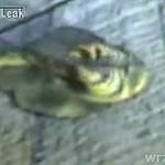 Dziwaczne stworzenie, wyłowione w Rosji