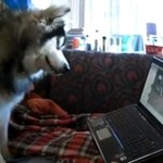 Pies ogląda sam siebie w Internecie