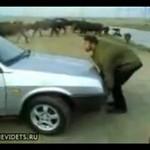 Mongoł ZATRZYMUJE samochód!