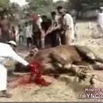 Krwawy arabski rytuał