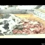 Niehumanitarne traktowanie zwierząt