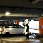 Panda kontra chamscy kierowcy