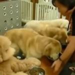 Psy modlą się przed jedzeniem!