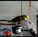"Ta papuga nigdy nie ""dorośnie""!"