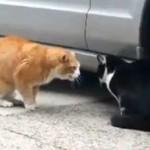 20 minut kotów - MEGA MIX!