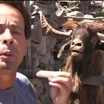 Top 5 dziwnych dźwięków, wydawanych przez zwierzęta