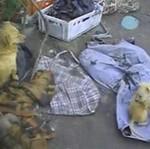 50 zagłodzonych psów w pomorskim schronisku! (18+)