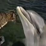 Kot- najlepszy przyjaciel delfina