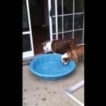 Ten pies PRAGNIE mieć basen na własność!