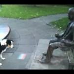 Pies nie ma szczęścia do znajdywania znajomych...