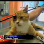 Kot PRZEŻYŁ postrzał w głowę!