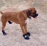 Psy w butach - o matko...