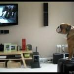 Ten pies ma swoją ulubioną reklamę