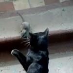 Czelabiński szczur bojowy